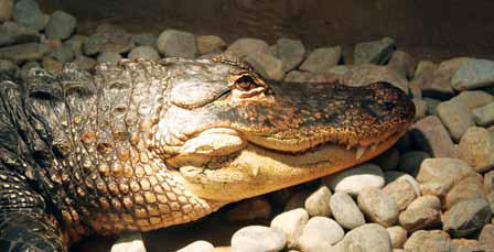 150826_reptiliaamerican